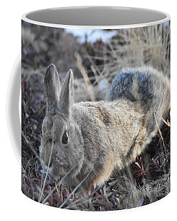 Coffee Mug featuring the photograph 02-27-18 Rabbit by Margarethe Binkley