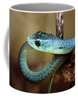 Boomslang Coffee Mug