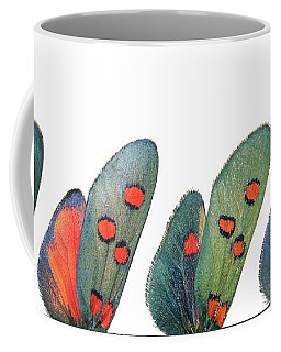 Burnet Moth Wings Coffee Mug