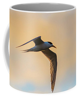 Crested Tern In The Early Morning Light Coffee Mug