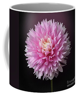 Dahlia 'chilson's Pride' Coffee Mug