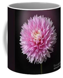 Dahlia 'chilson's Pride' Coffee Mug