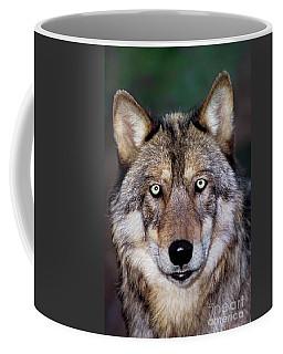 Gray Wolf Portrait Endangered Species Wildlife Rescue Coffee Mug