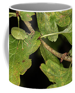 Green Shield Bug Nymph. Coffee Mug