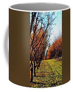Coffee Mug featuring the photograph Hazelnut Orchard 21578 by Jerry Sodorff