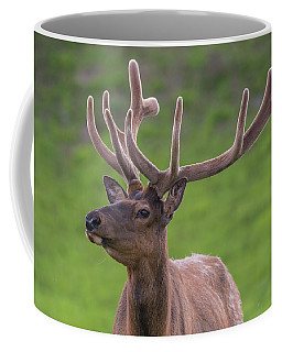 Coffee Mug featuring the photograph ME1 by Joshua Able's Wildlife