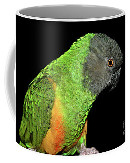 Coffee Mug featuring the photograph Senegal Parrot by Debbie Stahre