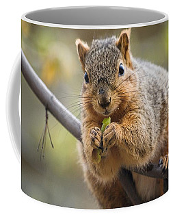 Snacking Squirrel Coffee Mug
