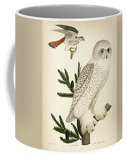 1. Snow Owl. 2. Male Sparrow-hawk. Coffee Mug
