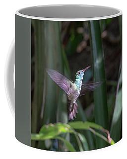 Versicolored Emerald Hummingbird Hovers Coffee Mug