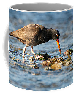 Black Oystercatcher Pacific Coast Coffee Mug