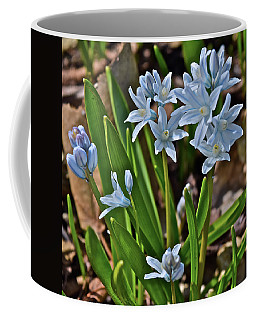 2019 Early April Striped Squill Coffee Mug