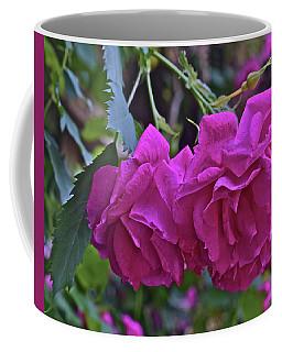 2019 June At The Gardens Shrub Roses Coffee Mug