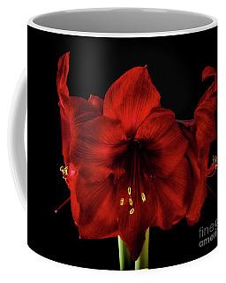 Amaryllis 'merlot' Coffee Mug
