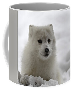 Artic Fox Coffee Mug