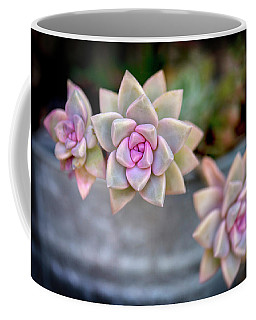 Coffee Mug featuring the photograph 3 Succulents by John Rodrigues