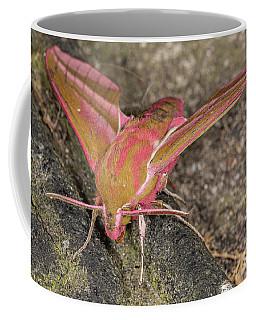 Elephant Hawk Moth Coffee Mug