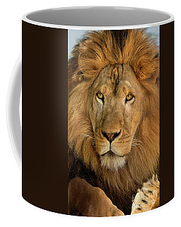 Coffee Mug featuring the photograph 656250006 African Lion Panthera Leo Wildlife Rescue by Dave Welling