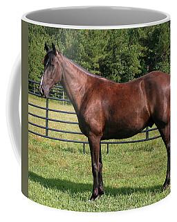 A Beautiful Horse Coffee Mug