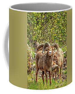 A Big Horn Sheep Coffee Mug