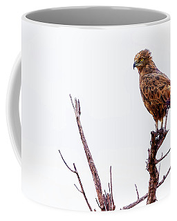 Coffee Mug featuring the photograph African Crowned Eagle by Kay Brewer