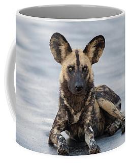African Wild Dog Resting On A Road Coffee Mug