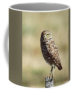 Coffee Mug featuring the photograph Alert by Sally Sperry