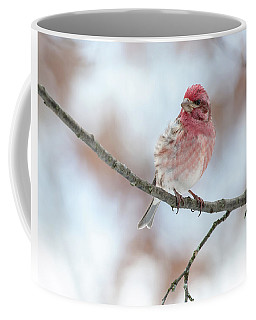 All Fluffed Up And Nowhere To Go Coffee Mug