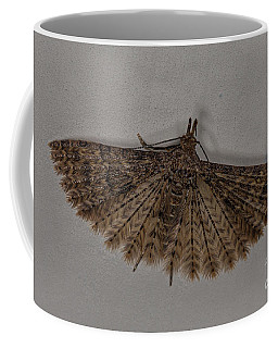 Alucita Moth Coffee Mug