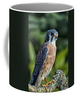 American Kestrel 9251501 Coffee Mug