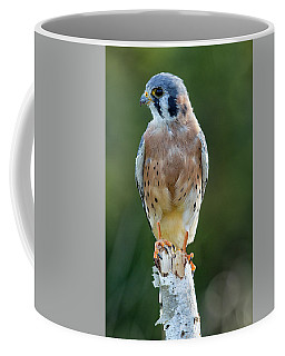 American Kestrel 9251502 Coffee Mug