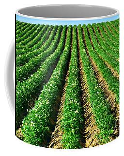 Aroostook County Potato Field Coffee Mug