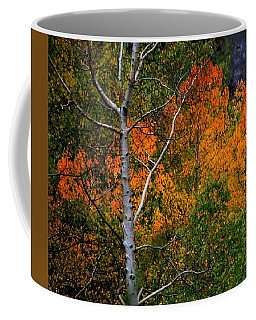 Aspens In Orange Coffee Mug