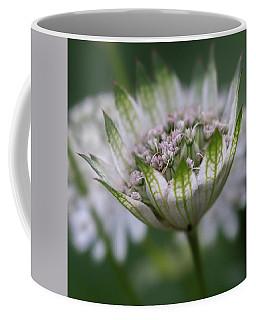 Astrantia Coffee Mug