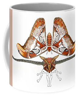 Atlas Moth3 Coffee Mug