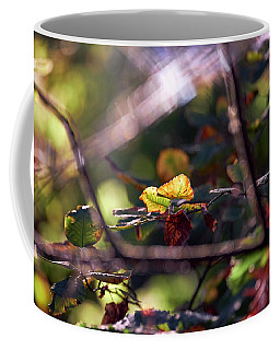 Coffee Mug featuring the photograph Autumn Beginnings by Whitney Goodey