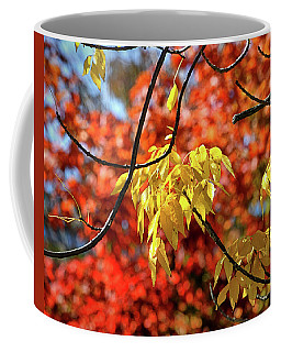 Coffee Mug featuring the photograph Autumn Foliage In Bar Harbor, Maine by Bill Swartwout Fine Art Photography