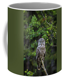 Coffee Mug featuring the photograph B16 by Joshua Able's Wildlife