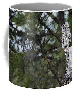 Coffee Mug featuring the photograph B17 by Joshua Able's Wildlife