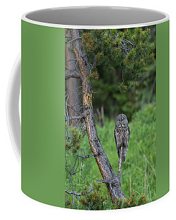 Coffee Mug featuring the photograph B20 by Joshua Able's Wildlife