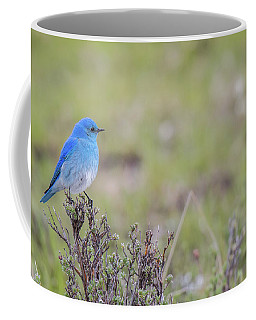 Coffee Mug featuring the photograph B23 by Joshua Able's Wildlife