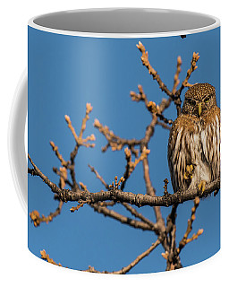 Coffee Mug featuring the photograph B37 by Joshua Able's Wildlife