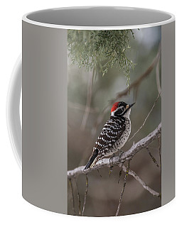 Coffee Mug featuring the photograph B42 by Joshua Able's Wildlife