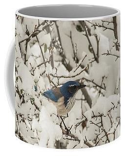 Coffee Mug featuring the photograph B44 by Joshua Able's Wildlife