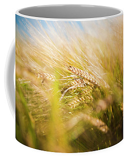 Background Of Ears Of Wheat In A Sunny Field. Coffee Mug
