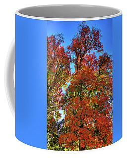 Coffee Mug featuring the photograph Backlit Autumn by David Patterson
