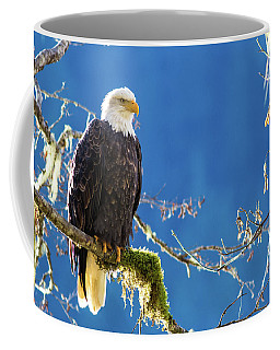 Backlit Bald Eagle In Squamish Coffee Mug