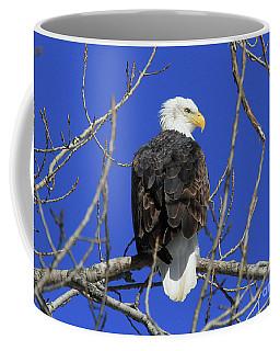Bald Eagle And Blue Sky Coffee Mug
