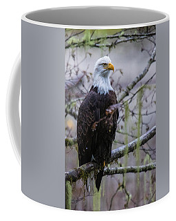 Bald Eagle In Rain Forest Coffee Mug