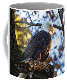 Coffee Mug featuring the photograph Bandit by Lori Coleman
